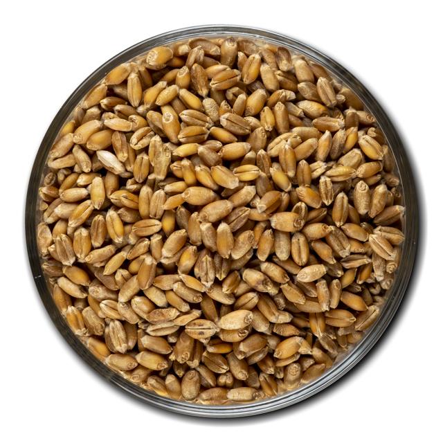 Пшеница мягкая класс 4