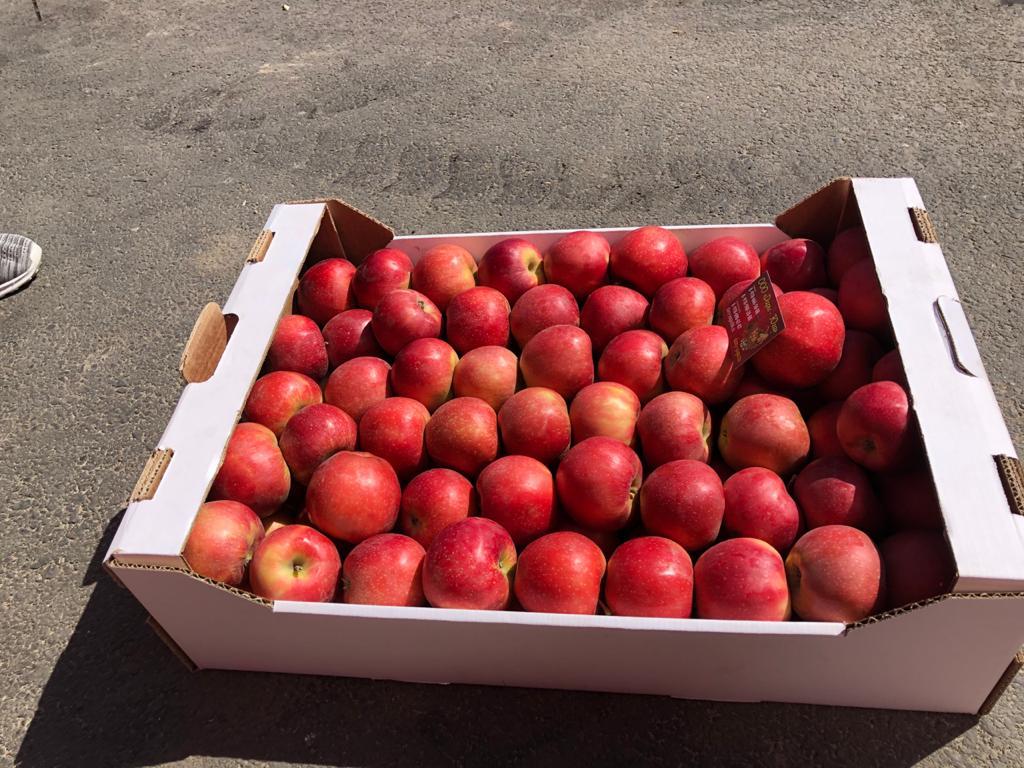 Яблоки №187916
