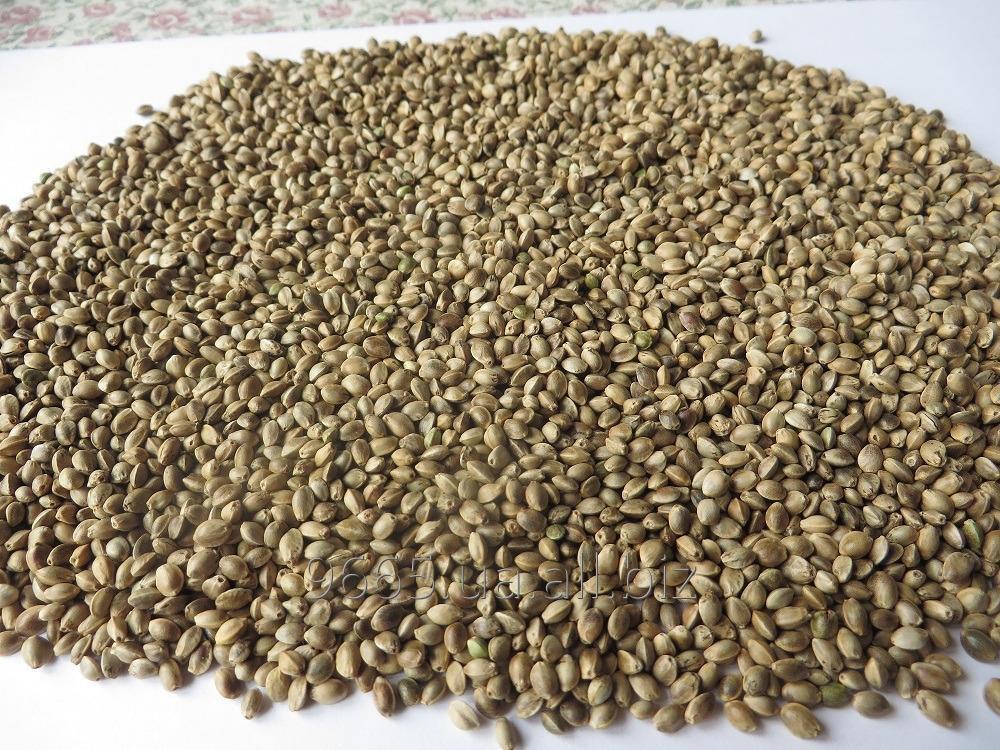 Семена конопли №19718