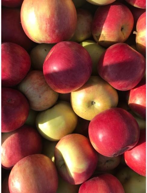 Яблоко красное 65+ 70+