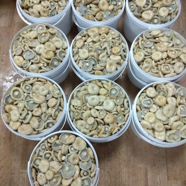 Грибы грузди(боровые-белянка) солено-отварные