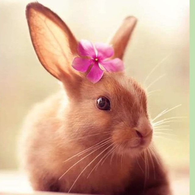 Концентрат Хлорелла для кроликов