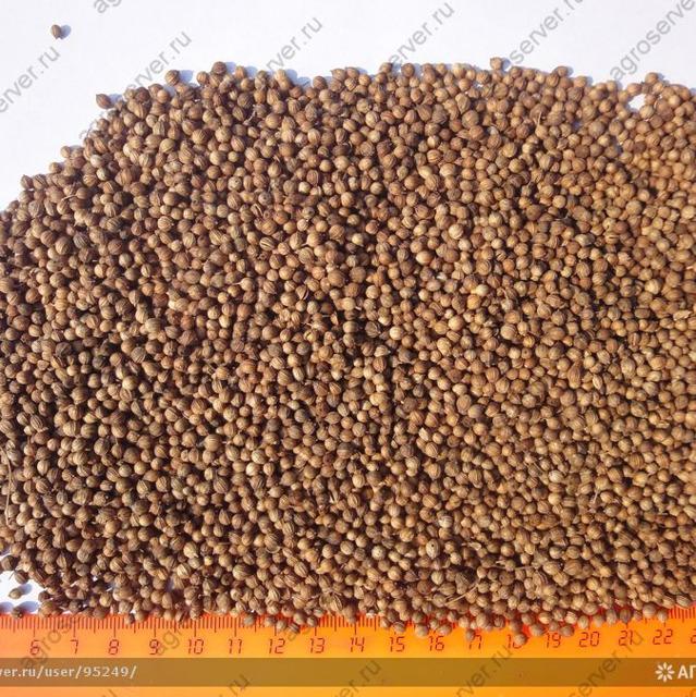 Кориандр зерно, кориандр молотый, жмых кориандровый