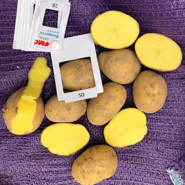 Картофель ГАЛА оптом 5+ от производителя. 14,5 руб./кг