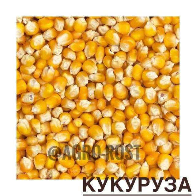 Кукуруза №255401