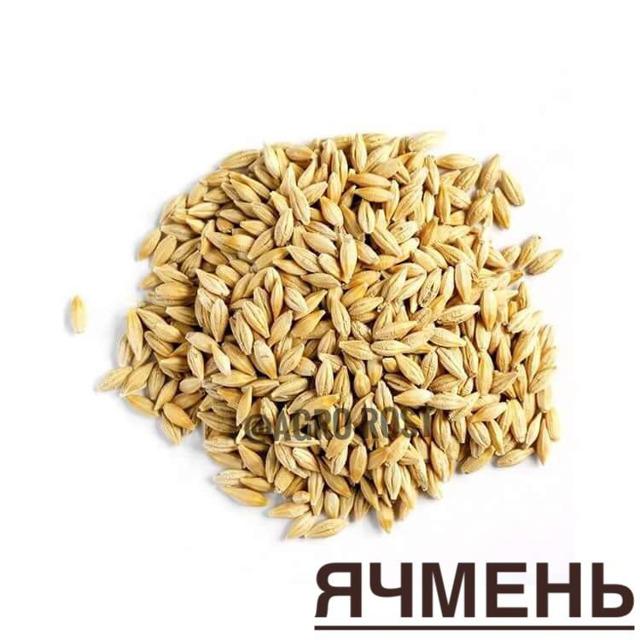 Ячмень семена