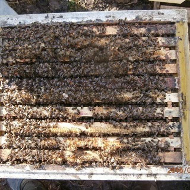 Пчелопакеты СПб