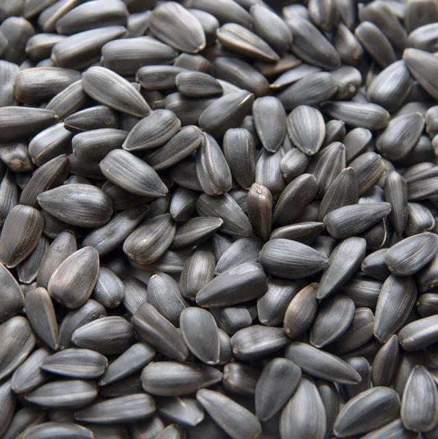 Семена подсолнечника производства ASPRIA Seeds