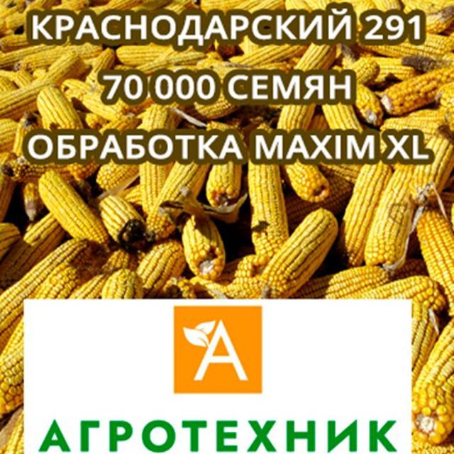 Гибрид кукурузы Краснодарский 291 АМВ