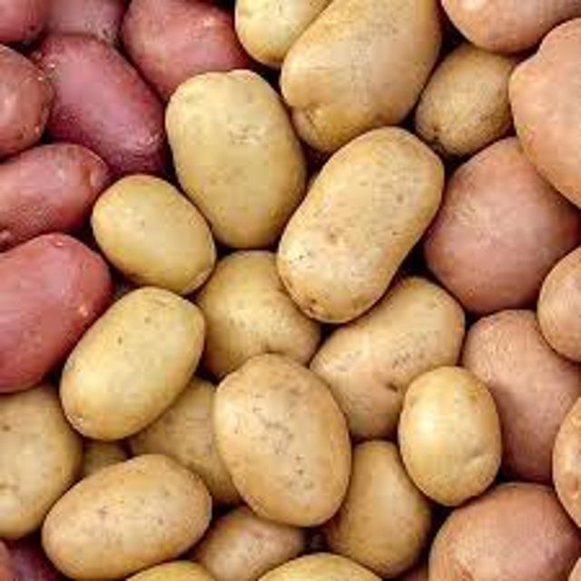Семенной картофель урожая 2020 г