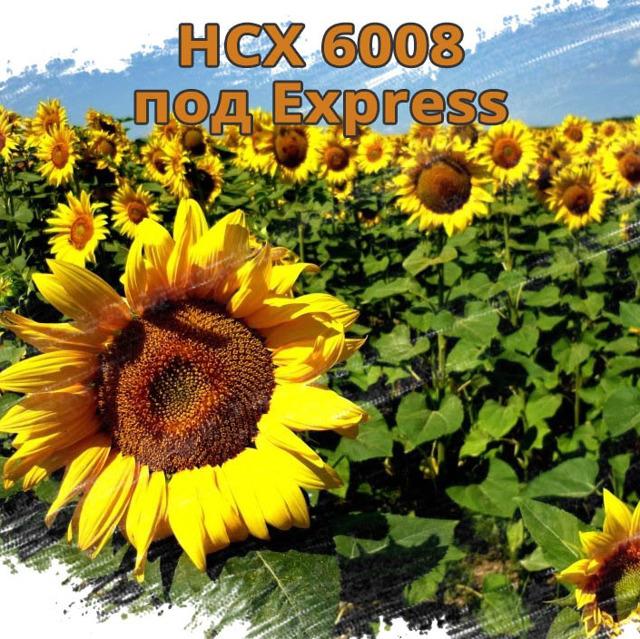 НСХ 6008 подсолнечник