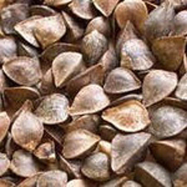 Семена гречихи. Девятка Элита