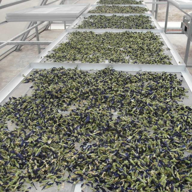 Анчан синий чай, сухие цветы клитории тройчатой