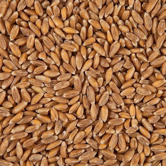 Пшеница Спельта Обрушенная / Spelt Dehulled conventional