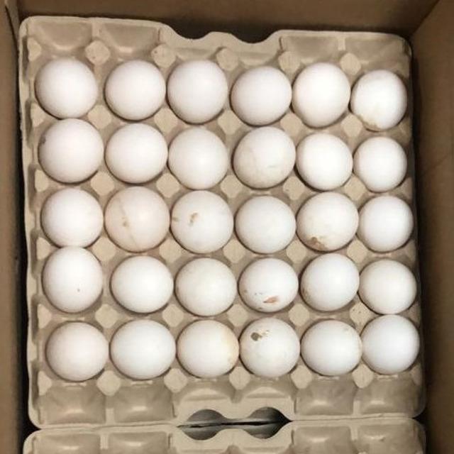Яйцо куриное №298438