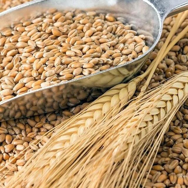 Пшеница №298518