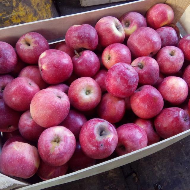 Яблоко оптом №300940