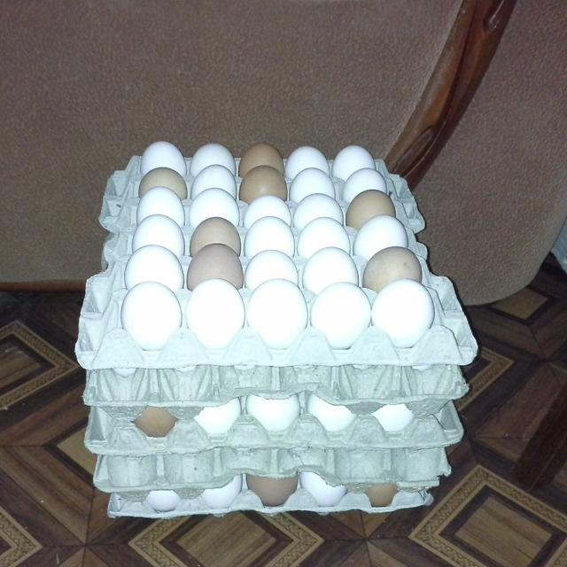 Яйцо куриное инкубационное.