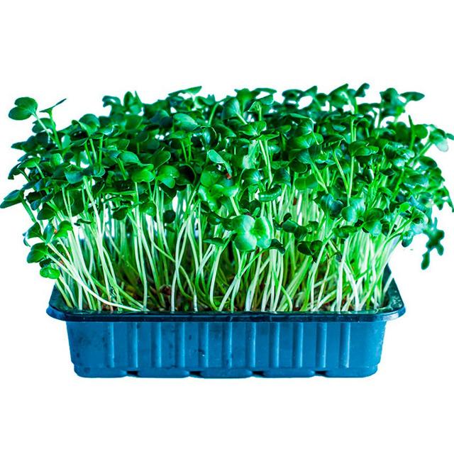 Микрозелень от производителя. Натуральная (без химии)
